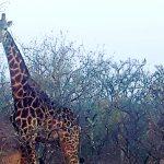 3-eai-outdoors-namibia-giraffe