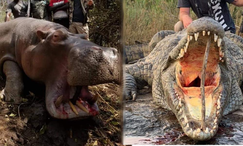 EAI Ooutdoors Hippo Croc Combo Zimbabwe