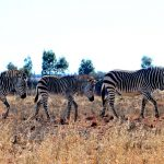 Namibia - EAIOutdoors.com Adventure Hunting