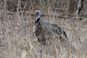 Eai Outdoors South Dakota Turkey Hunt