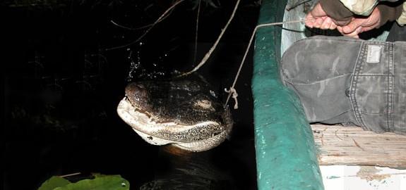 EAI-Outdoors-Florida-Alligator-Hunting