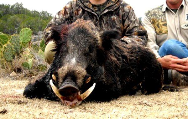 EAI-Outdoors-Texas-Hunting