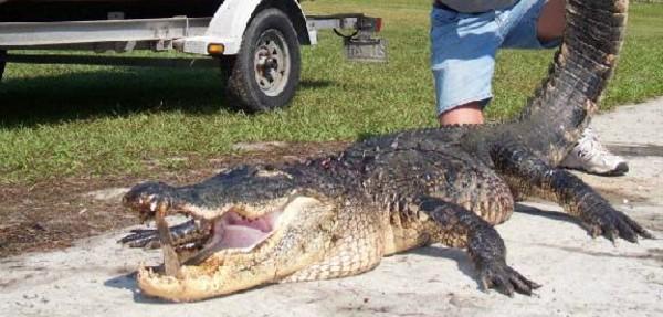 EAI-Outdoors-Florida-Alligator-Hunting-Cocoa-Beach