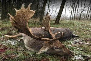 EAI-Outdoors-Hunting-Europe