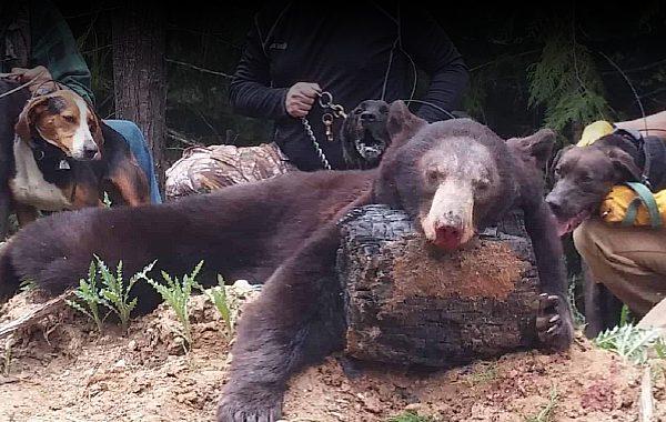 EAI-Outdoors-Idaho-Bear Hunt