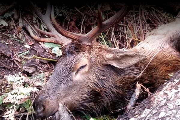 EAI-Outdoors-Idaho-Elk
