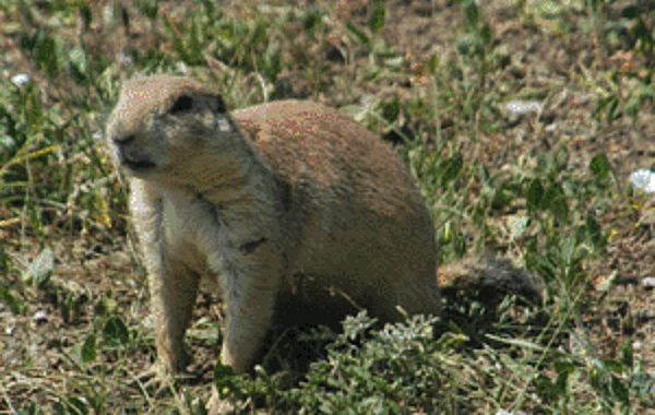 EAI-Outdoors-South-Dakota-Prairie-Dog-Hunting