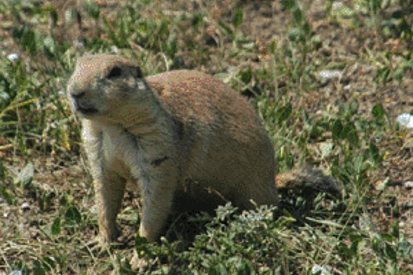 EAI-Outdoors-South-Dakota-Prairie-Dog-Hunting