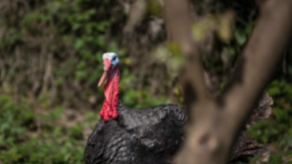 EAI Outdoors Turkey Hunting