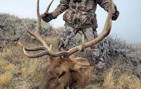 Wyoming-Elk-EAI