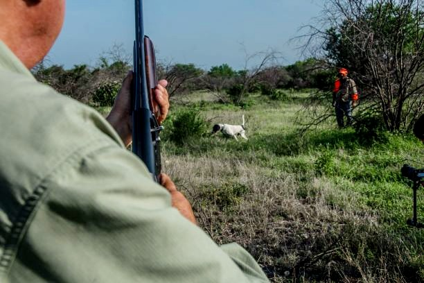 old-mexico-wingshooting